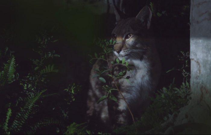 Ночные животные в рекламе Range Rover Velar